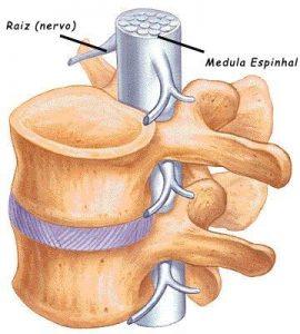 anatomia da coluna